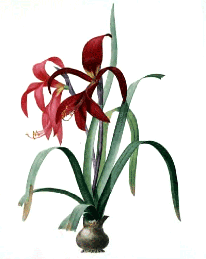 An illustration of attractive flowers with red blooms